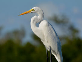 Egret sitting on a pole at docks in Avon.